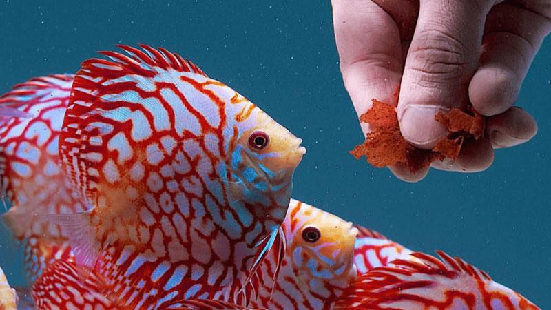 انواع غذا ماهی